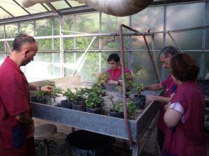 Con el apoyo de Bantierra, 25 personas con discapacidad se forman como operarios de invernadero